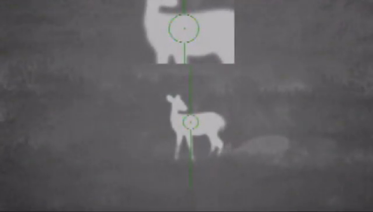 Deer in Thermal Scope
