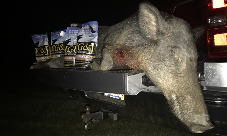 South Carolina Nuisance Hog with Big and J Hog Attractants